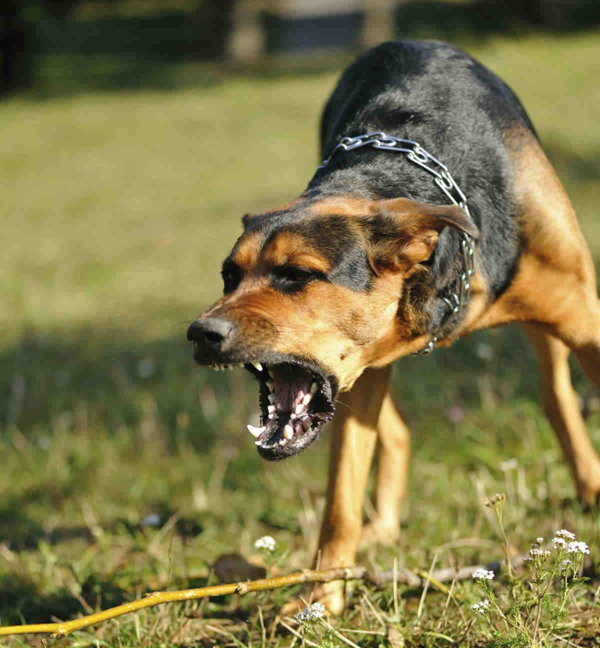 Laws Regarding Dog Bites